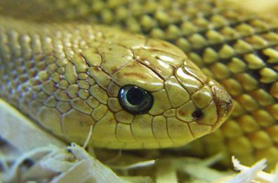 A snake representing satan